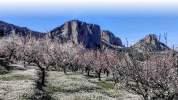 blossom-crags2