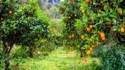 Apelsinlund_37004842590_l