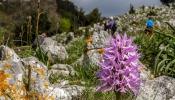 Orchis italica-11