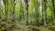 Skuggans skog-28