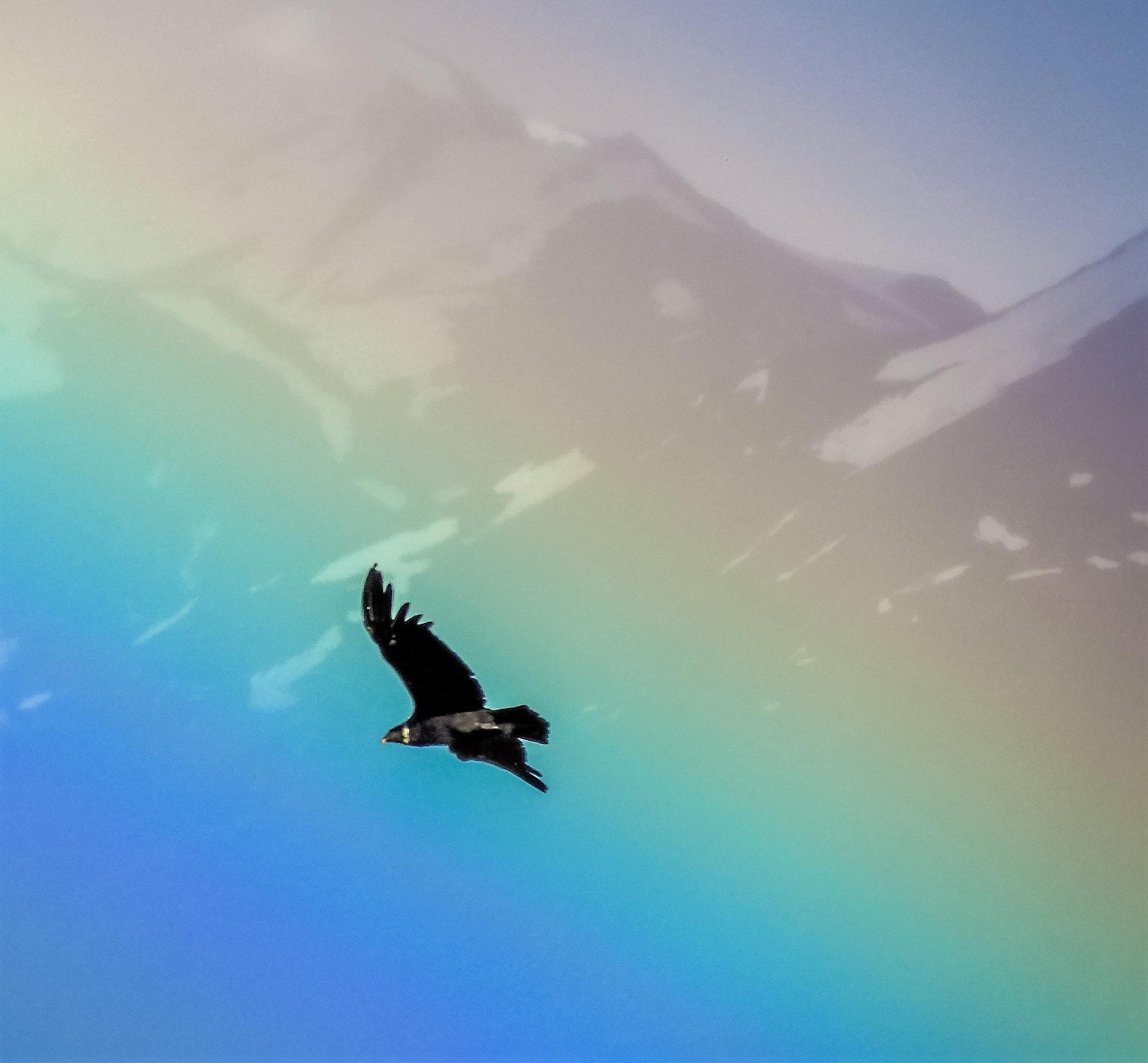 Kondor mot regnbåge