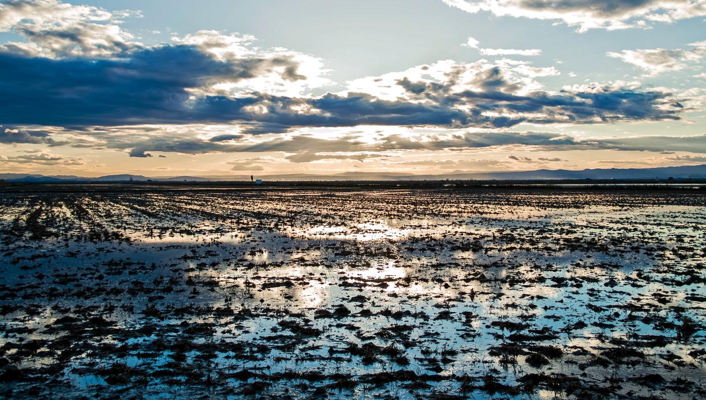 Day-5-rice-fields-8