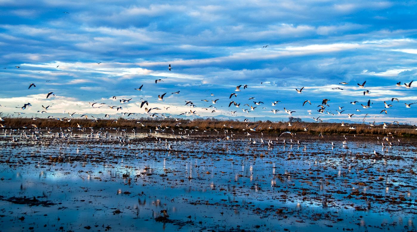 Day-6-Albufera-birds-9