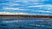 Day-6-Albufera-birds-9